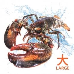Live Lobster-Large
