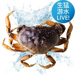 Live Dungeness Crab-Large