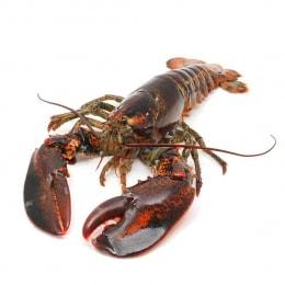 生猛游水龙虾(约1.75-2.2磅)